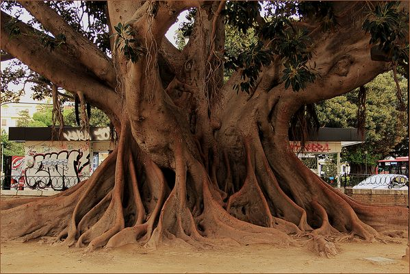 Tag des Baumes 2016