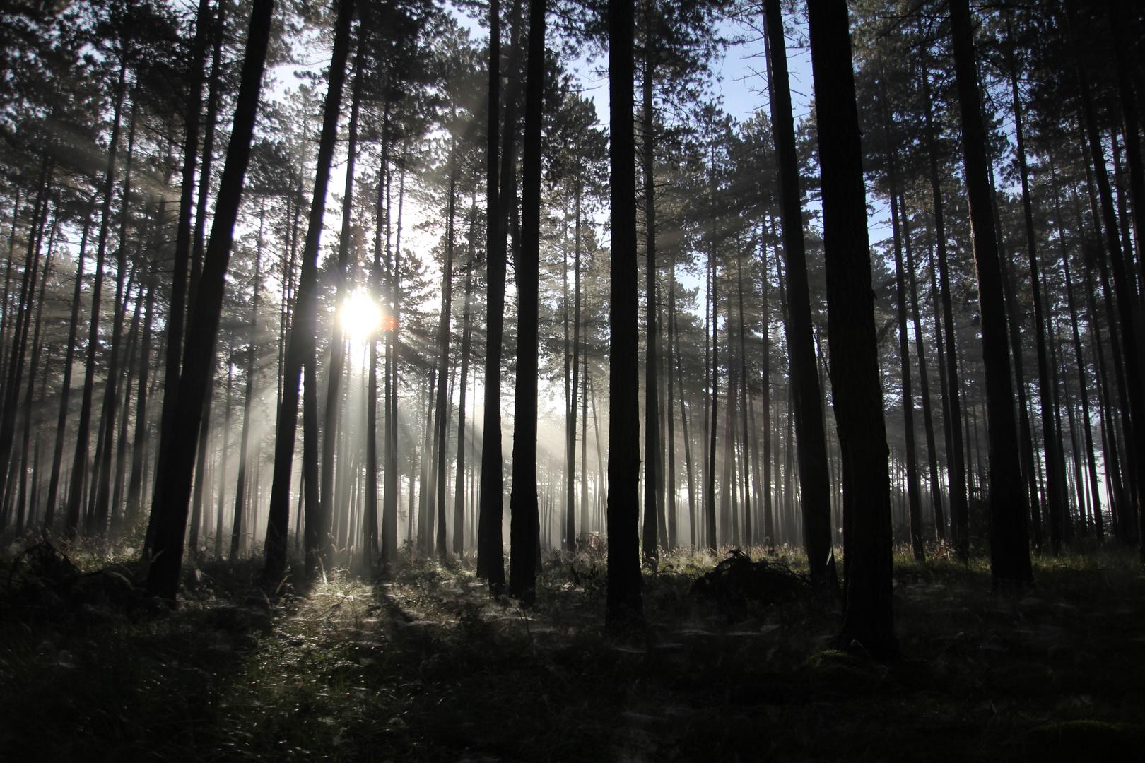Tag erwacht im barnimer Wald