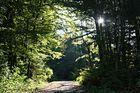 Tag im Wald
