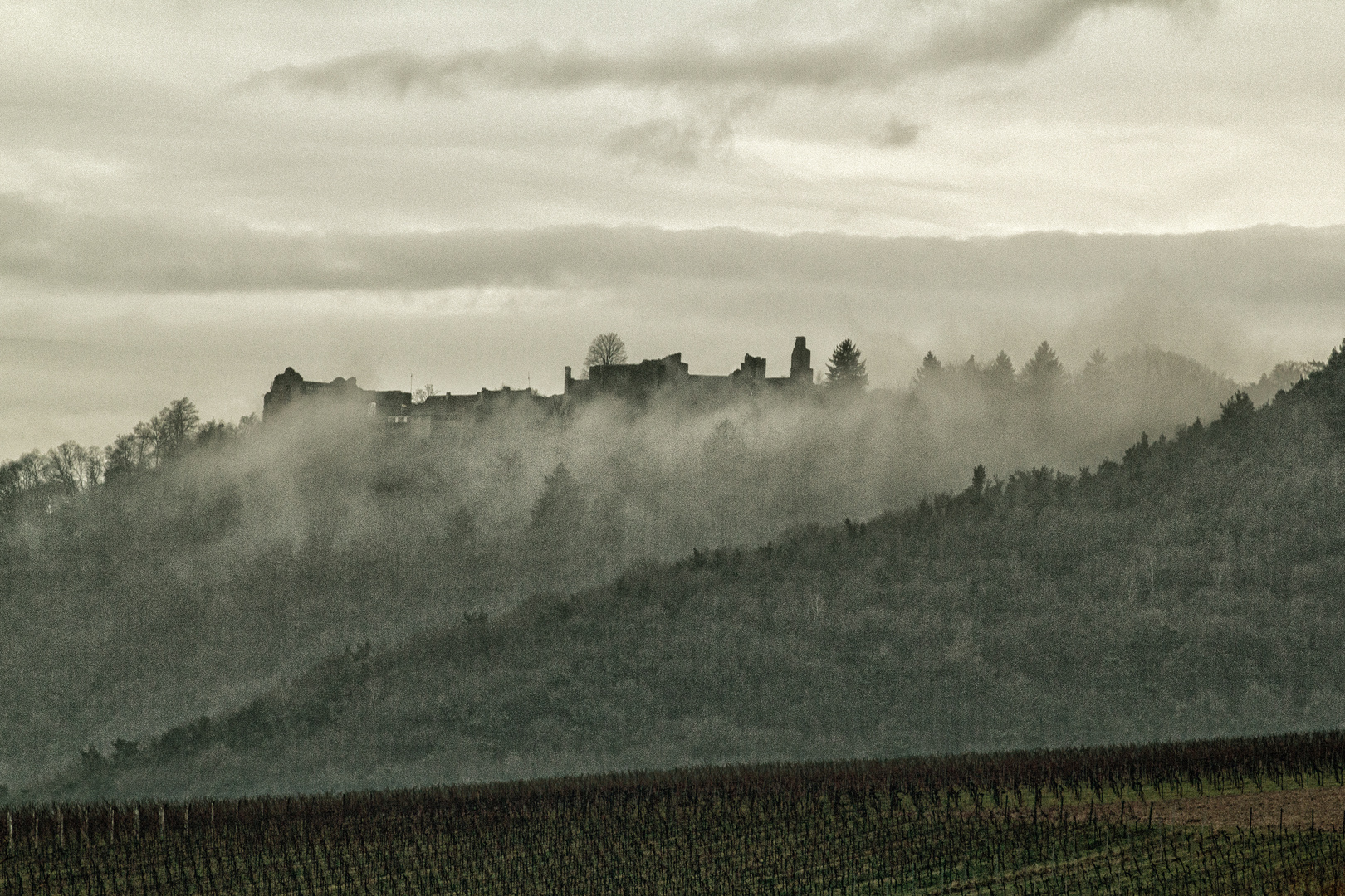 Tagesanbruch in der Pfalz I
