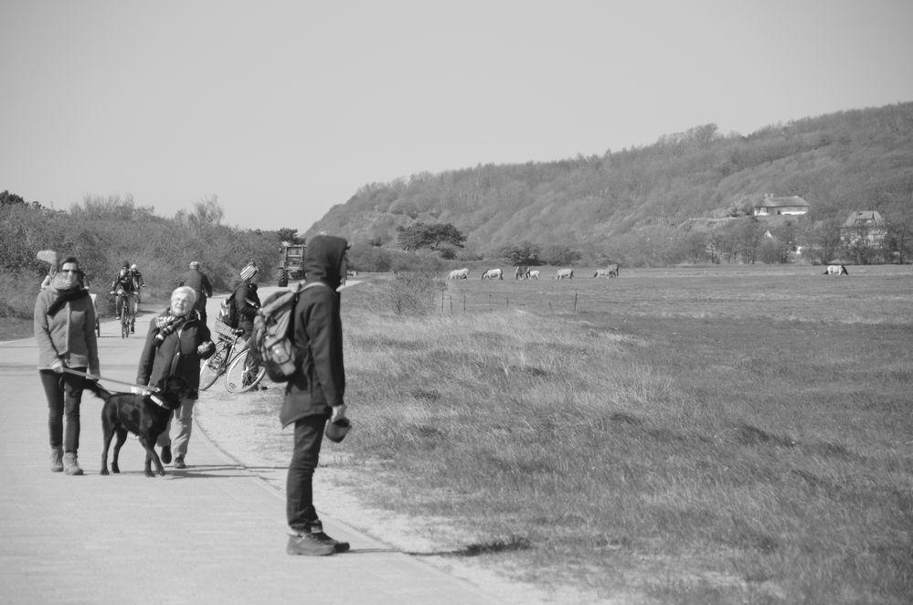 Tagestour Hiddensee