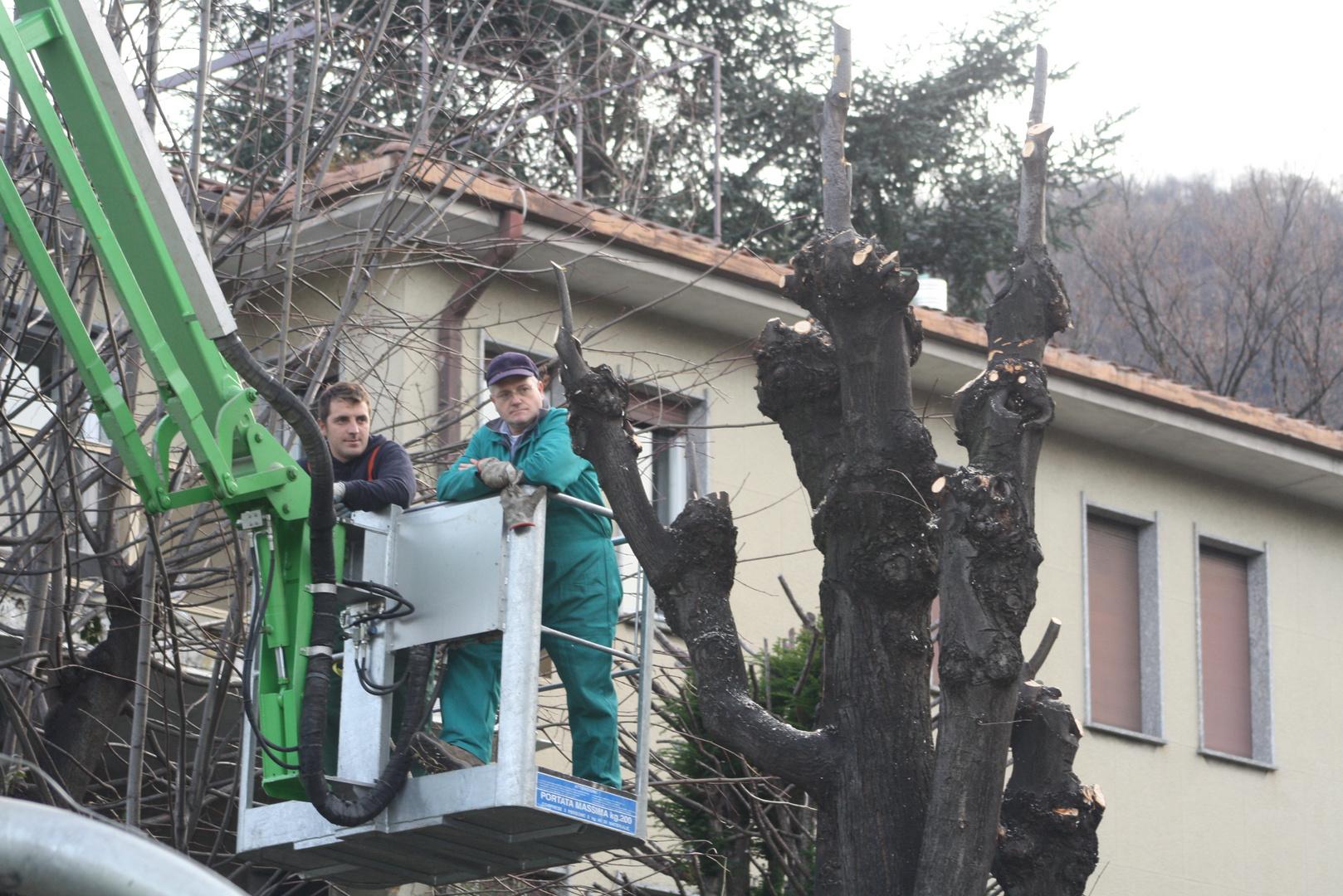 taglio degli alberi