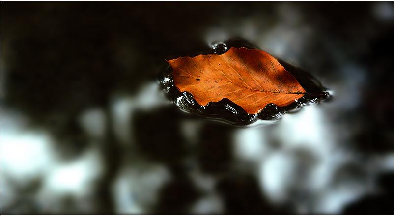 Tagtraum Herbst