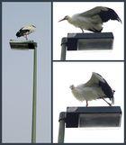 """Tai Chi - """"Der goldene Hahn steht auf einem Bein"""""""