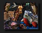 Tajaras Tierwelt II