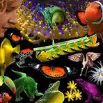 Tajaras Tierwelt - wiedergefunden