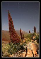 Tajinastes, Teide y estrellas