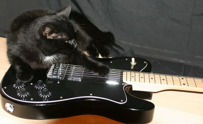 Take care for the Black Cat