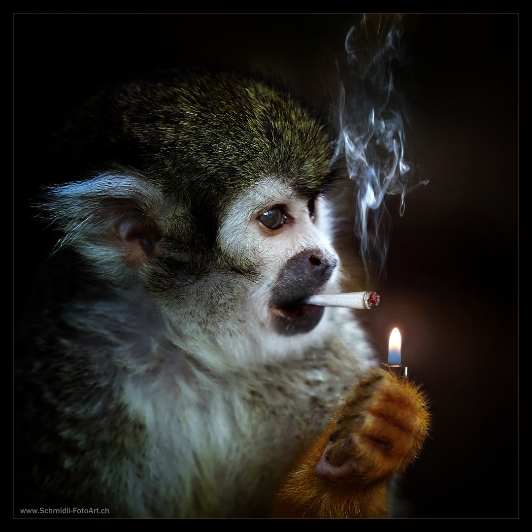 Take it Easy, smoke a Joint!