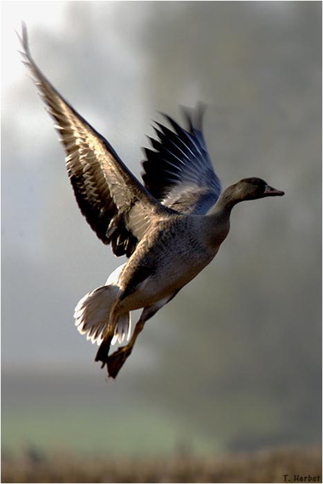 Take off ...