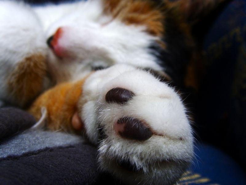 Takin' a nap