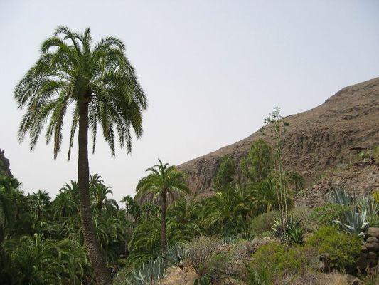 Tal der 1000 Palmen..