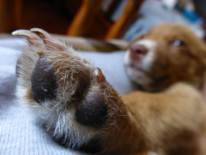 Talk to my paw