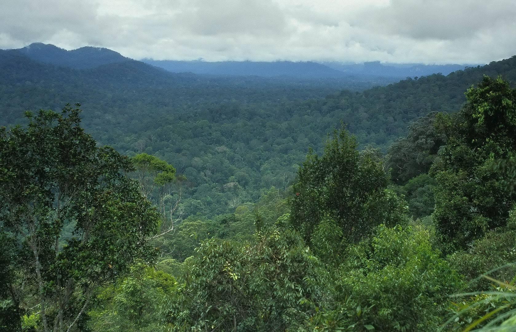 Taman Negara Nationalpark 2007