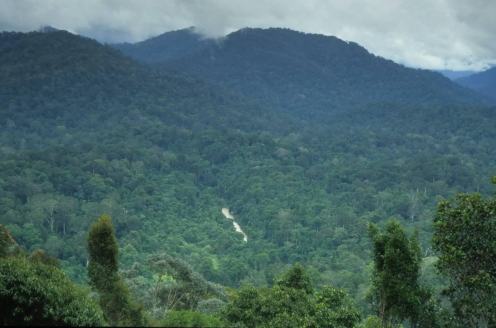 Taman Negara Nationalpark Malaysia