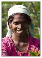 tamilische Teepflückerin auf Sri Lanka