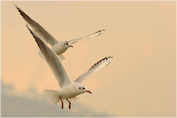 Tandem-Flug