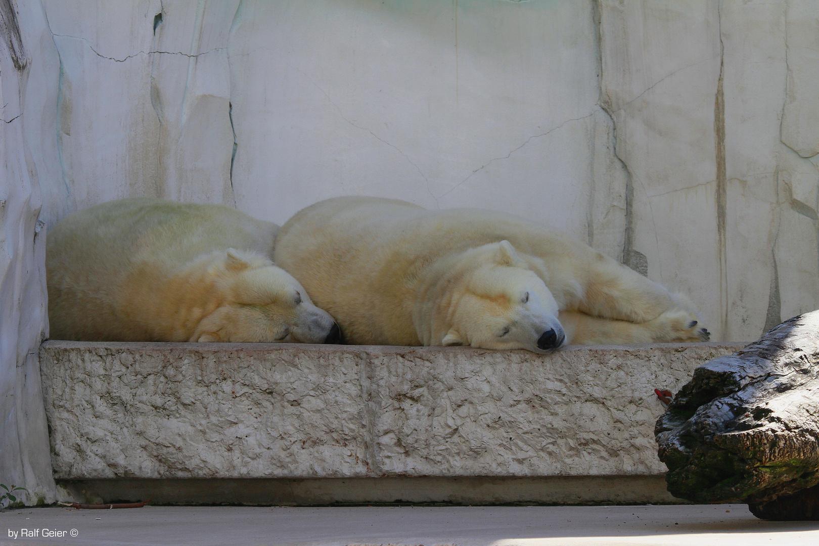 Tandem Schlafen ;-)