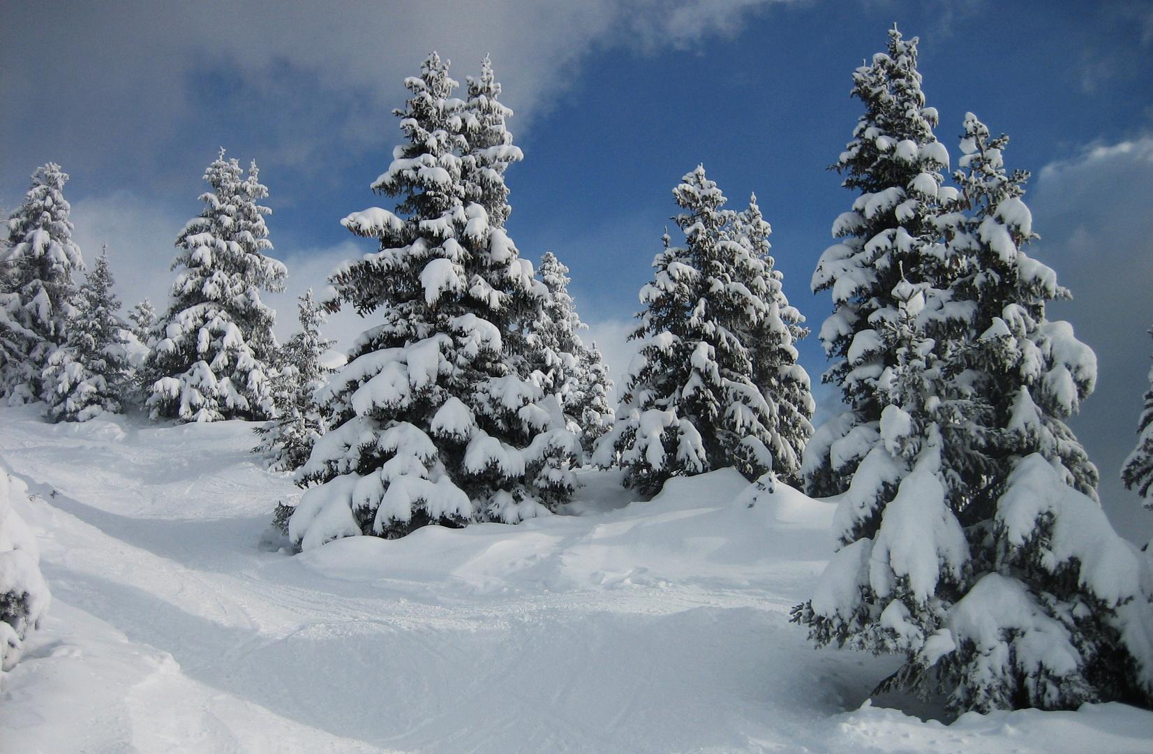 Tannen im Schneekleid