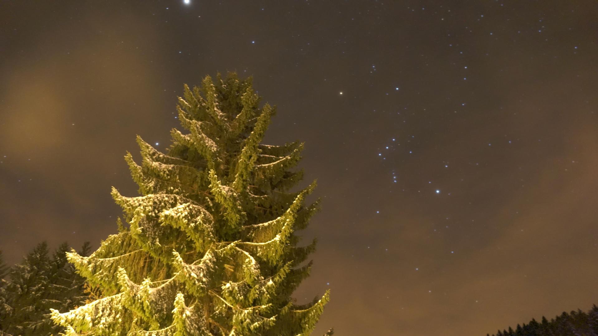 Tannenbaum im Winter bei Nacht Sylvesterabend 2013/2014