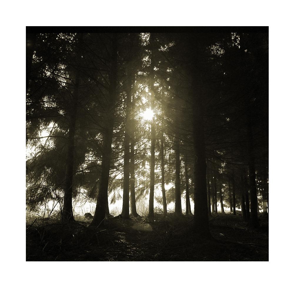 tannenwald von Peter Caspers