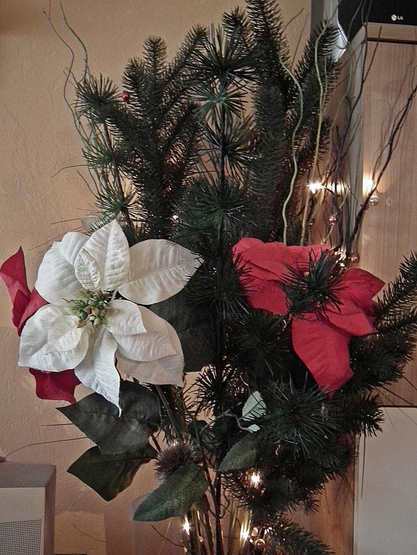 Tannenzweige und Weihnachtsstern (Künstlich)