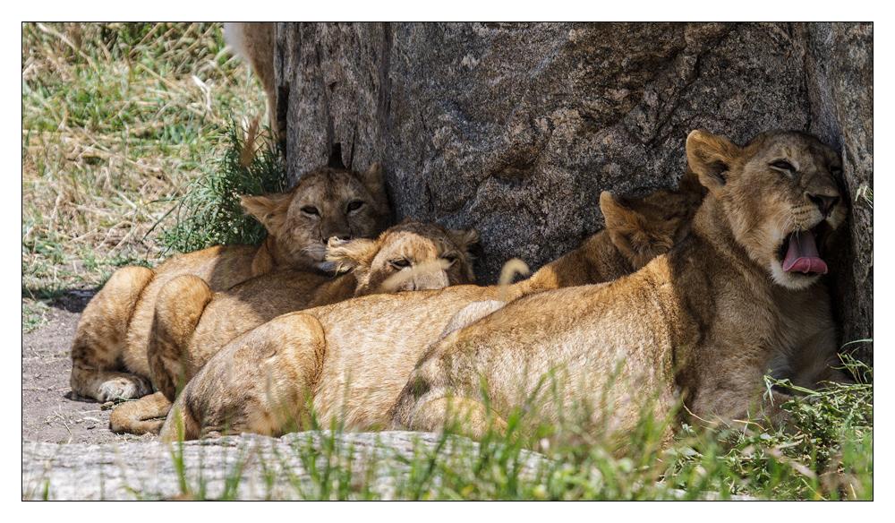 Tansania - 95 - Die Prinzen und Prinzessinnen
