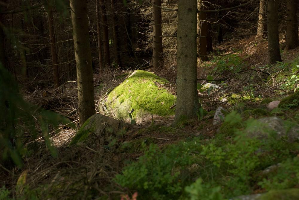 Tanumsheder Wald