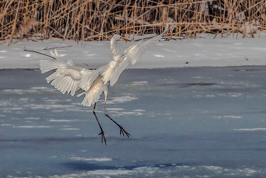 Tanz auf dem Eis.