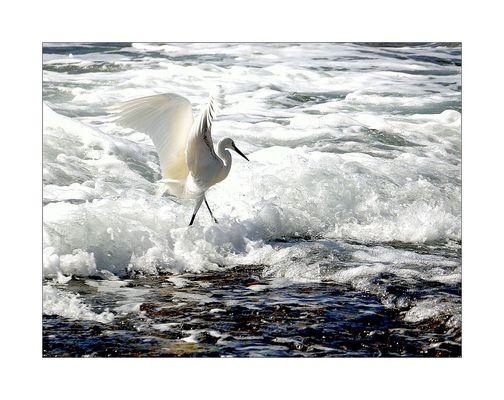 Tanz auf den Wellen