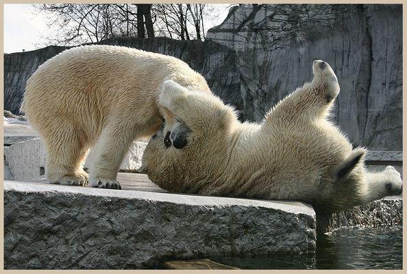 Tanz der Eisbären I