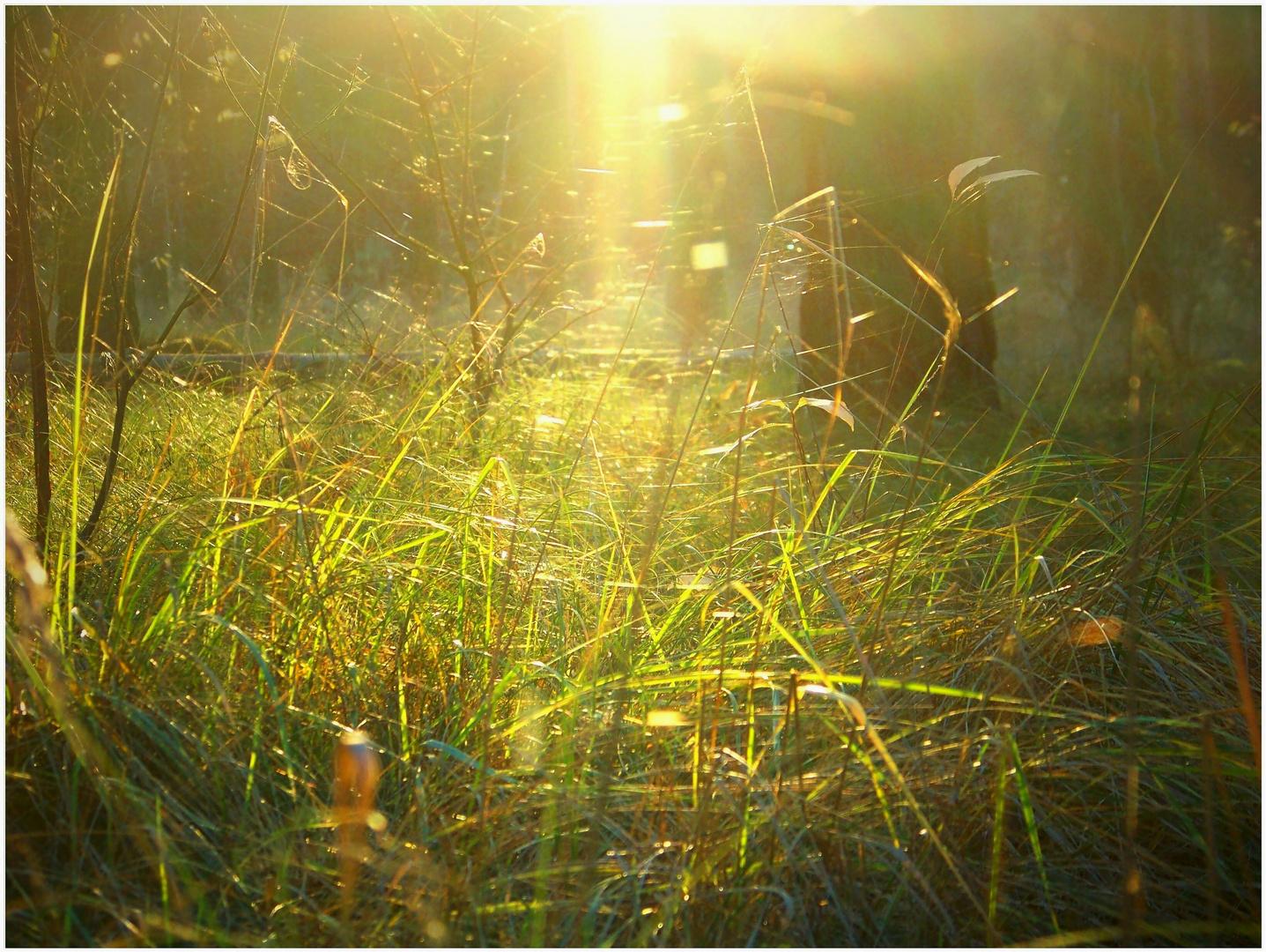Tanz der Gräser