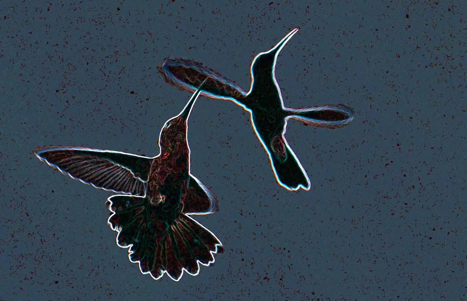 tanz der kolibries