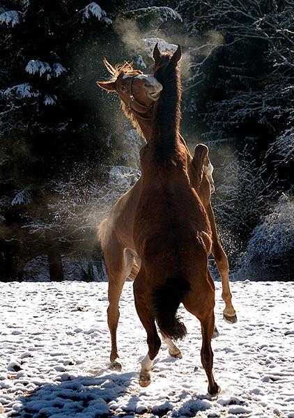 Tanz im Schnee