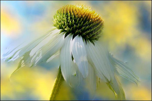 tanz im wind,,,