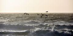 Tanz über den Wellen