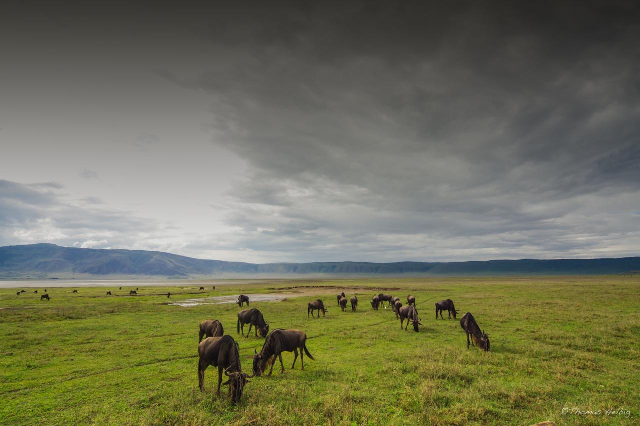 Tanzania #3