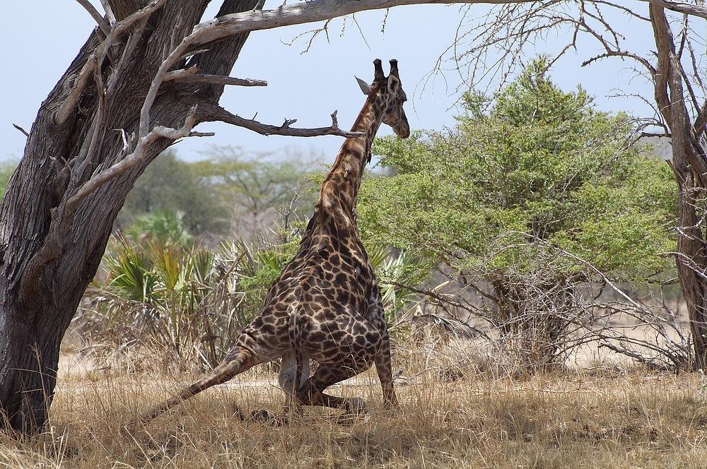TANZANIA Selous Schutzgebiet 19