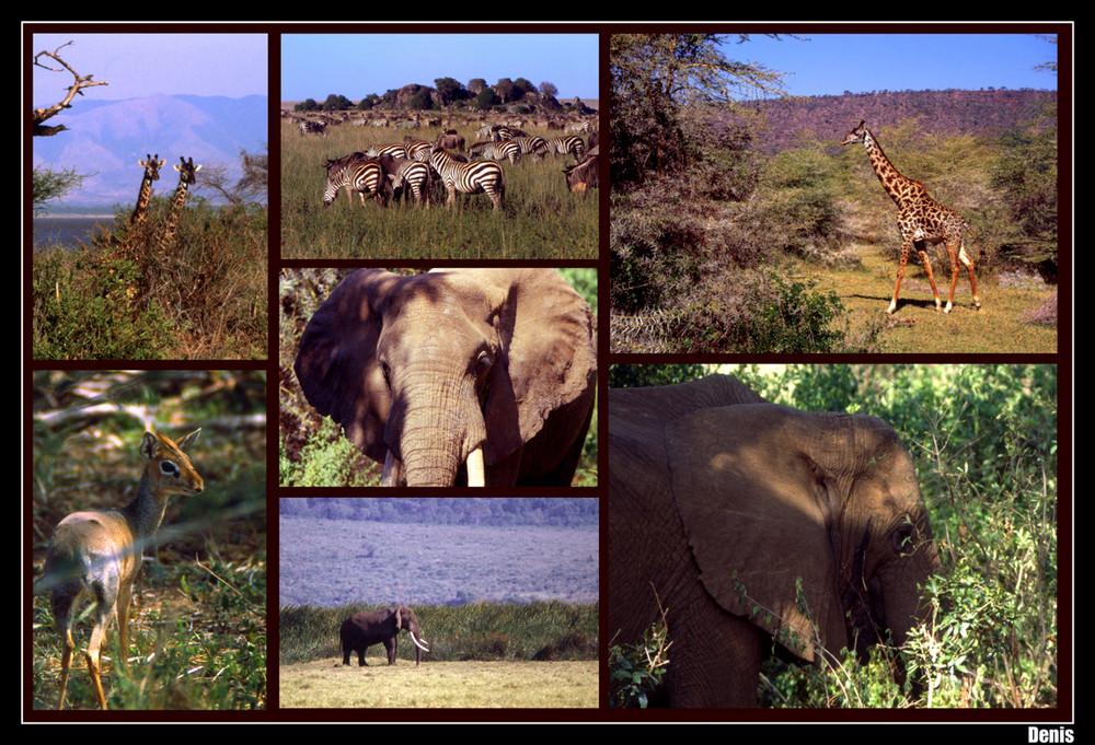 ...Tanzanie sauvage...
