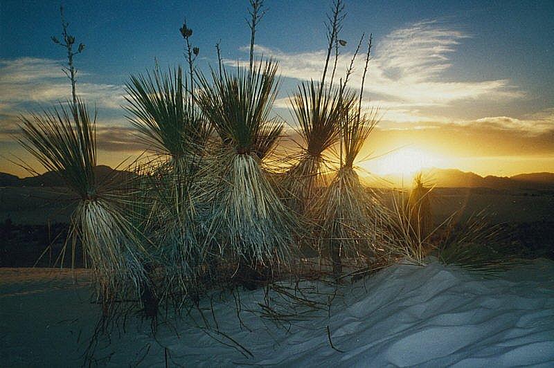 Tanzende Buschmänner im Sonnenuntergang