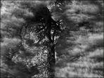 Tanzender Baum
