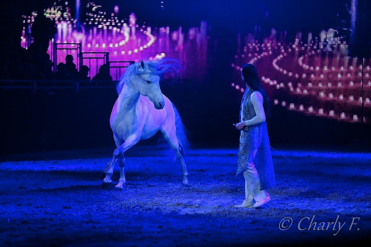 Tanzendes Pferd....