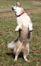 Tanzhund