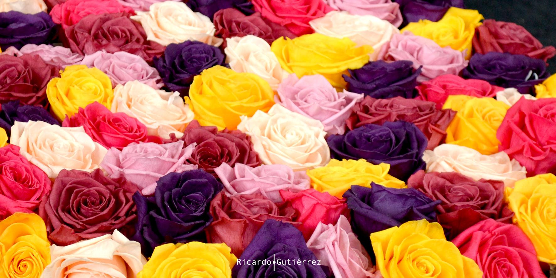 Tapete de Rosas