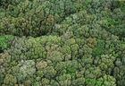 Tapis d'arbres!!