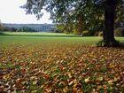 tapis de feuilles pour un château