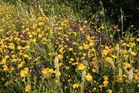 Tappeto di fiori di campagna