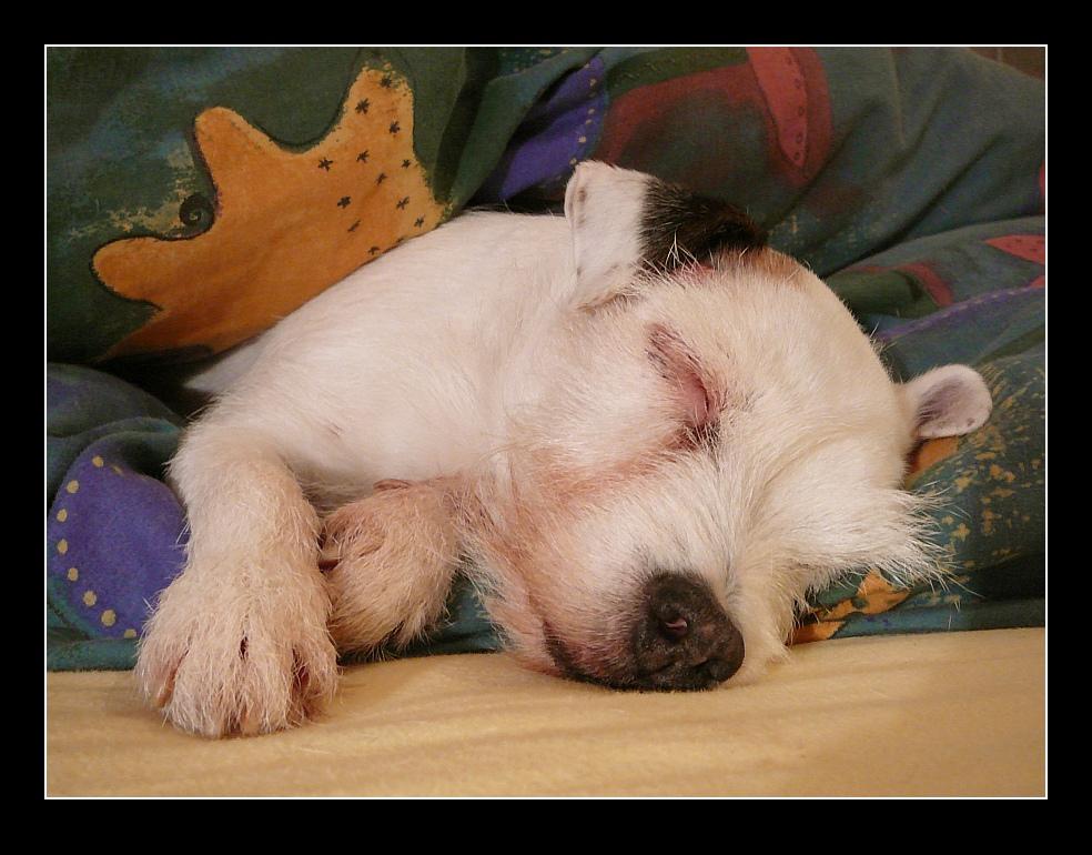 Tara schläft nun für immer...