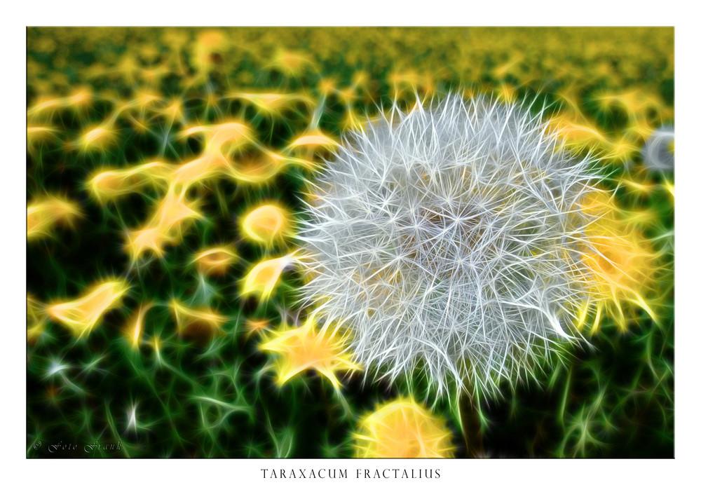 Taraxacum fractalius