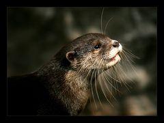 Tarka, der Otter